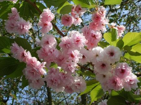 Весной и какие пропорции удобрений