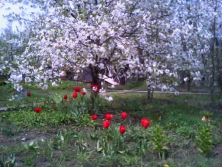 По весне чтобы весь сезон сад и огород